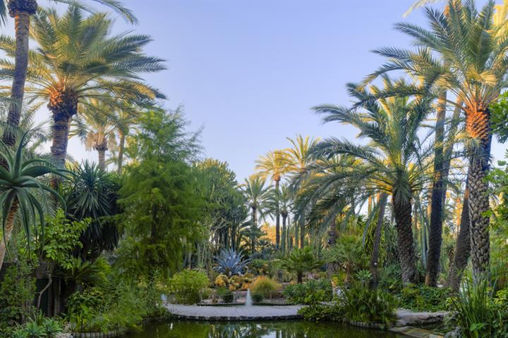 Elche, Spain's palm tree city and world heritage site