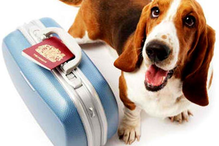 Travelling with Pets in Spain