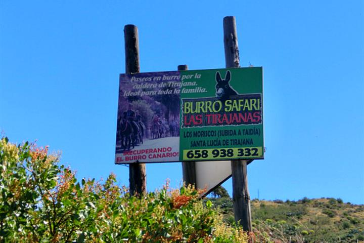 On safari in Gran Canaria, Burro Safari Las Tirajanas