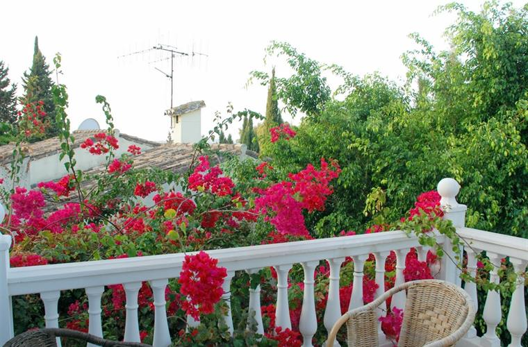Bougainvillea and terrace.