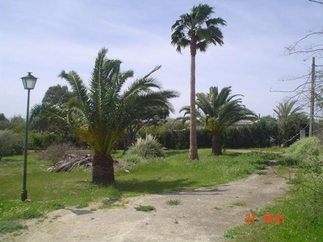 The entrance with palm trees