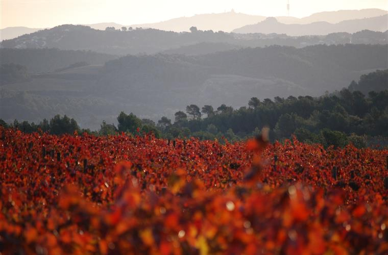 Penedes wine region, 10 minutes from Torre Nova