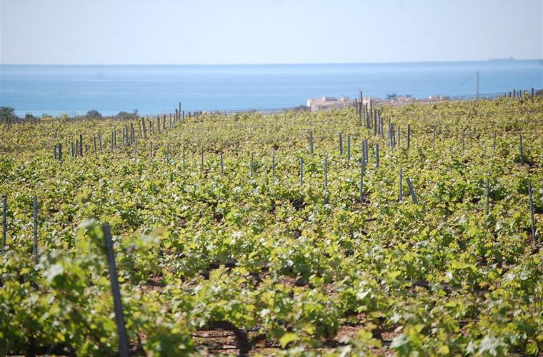 MASIA BARTOMEUour  vineyard in front of the sea