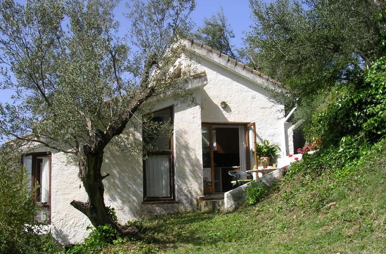 Studio is tucked among olive trees.