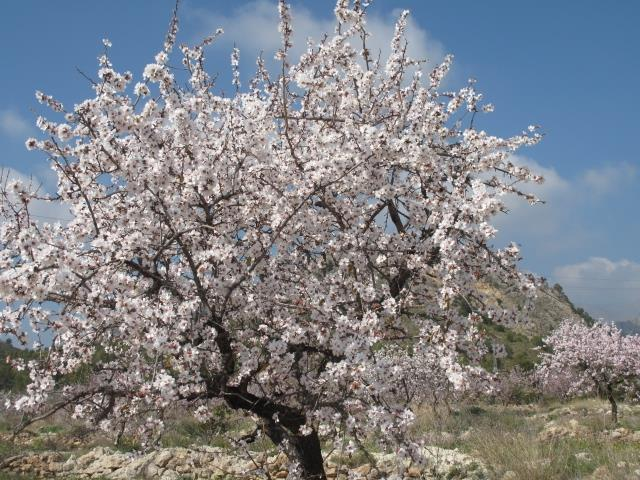 Visit in February to see the wonderful almond blossom