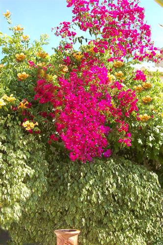 splash of colour through out the lush and vibrant gardens