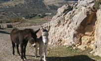 Our rescued donkeys Donqui and Silver