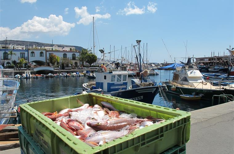 Always fresh fish in Puerto de Mogan