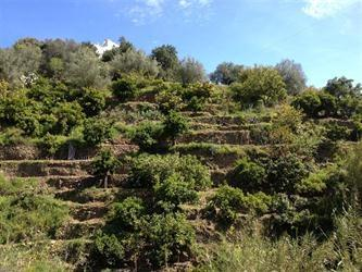 The valley with the different layers for orange and olive trees