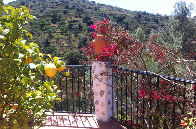 You can pick your own lemons on the terrace