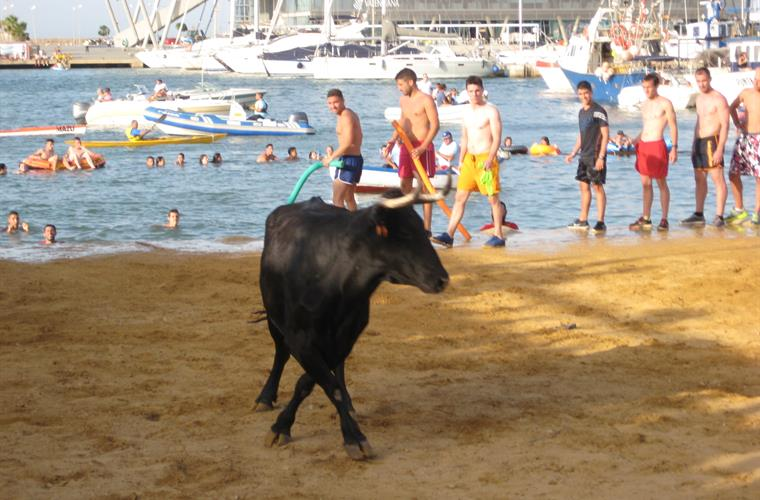 Bulls by the Sea during Denia Festival in July
