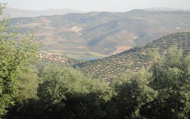 Iznájar Olive Groves