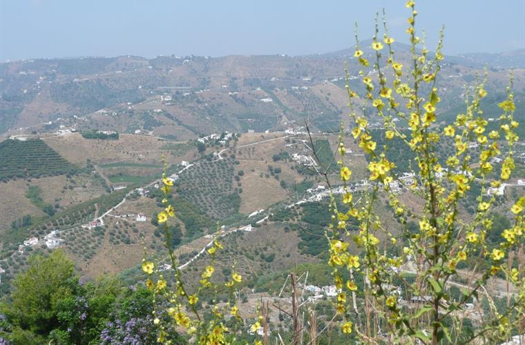 Frigiliana surroundings