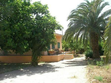Front of house, Huge Fig tree and palm trees