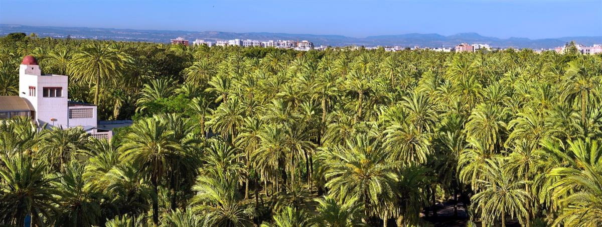 Visit the palm grove of Elche, declared World Heritage by UNESCO