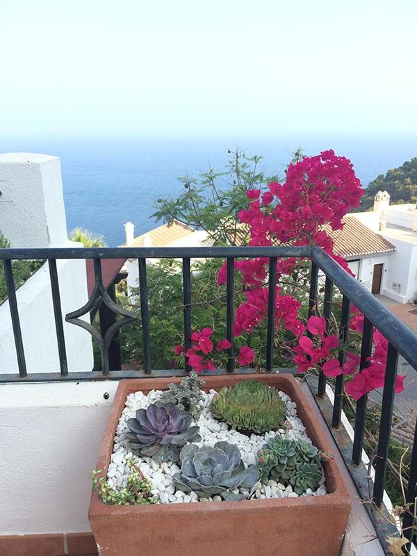 Flower boxes on main terrace and balcony with Mediterranean plants