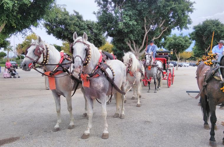 One of the many horse shows in Velez-Malaga