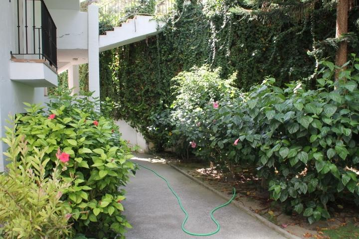 The nice garden in the urbanisation