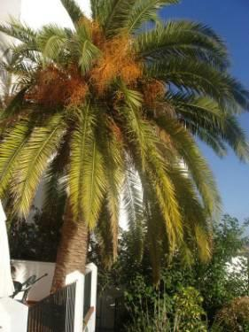 Palm tree on terrace