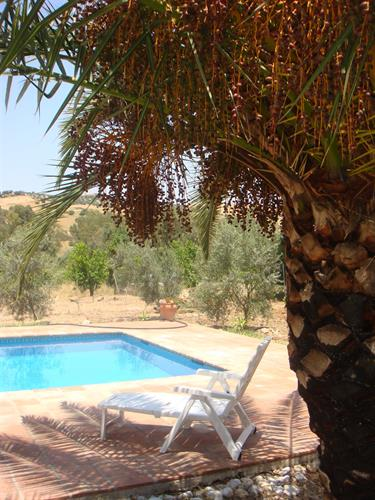 Our palm provides a shady spot by the pool