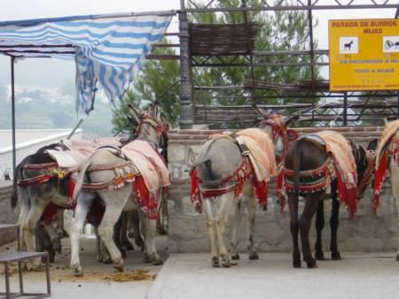 the famous Burro taxi