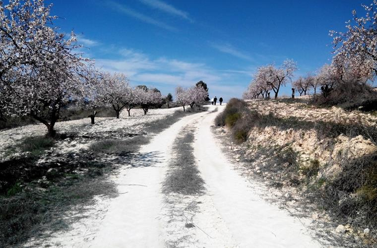 Wonderful land of almond trees.