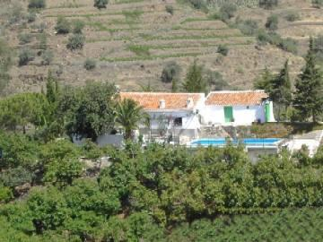 View of the house surrounded by avocado trees and vineyards