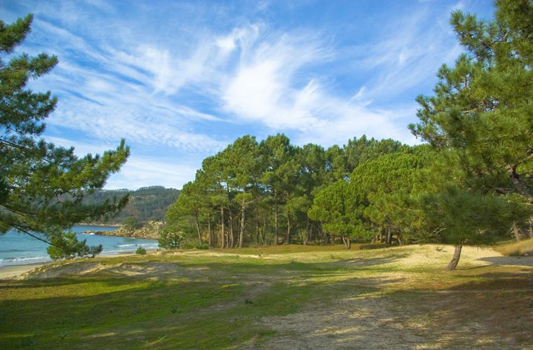 Forest and Beach of Viño