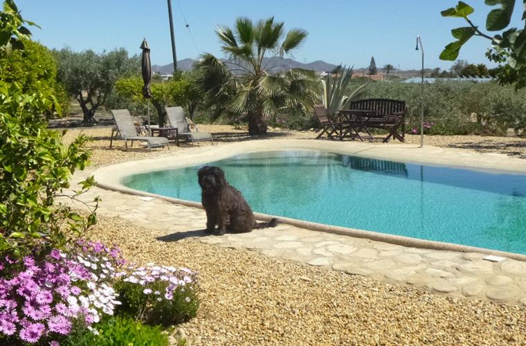 Finca Arboleda Welcomes Well Behaved Dogs