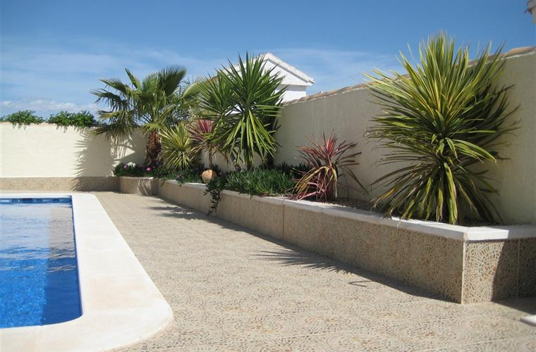 Decorative shrubs and palms
