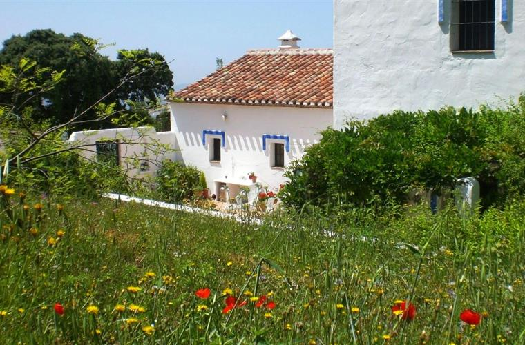 Wildflowers at the Cortijo