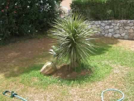 Small palm tree in front yard