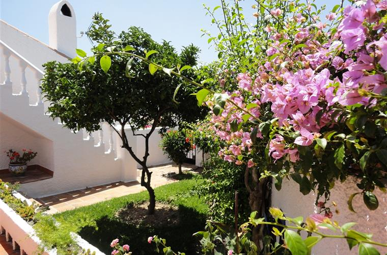 Private garden with orange tree