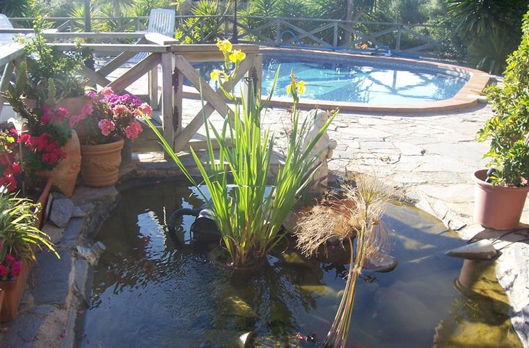 The fish pond on the terrace