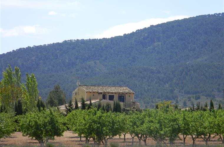 Bodega El Refugio nestles amongst almond fields within the hills