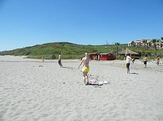 Cricket on beach