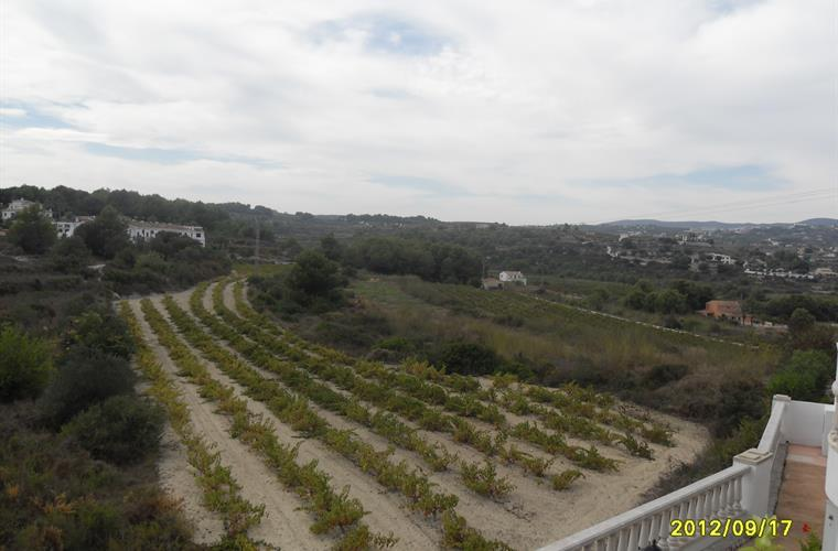 view at the grapeviness from the terrace