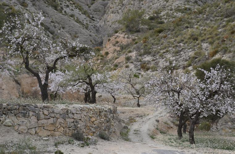 Almond blossom route is,especially in Feb-March,a unique experienc