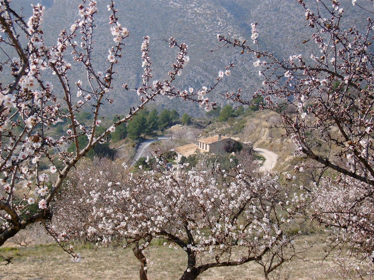House set amidst large almond orchards