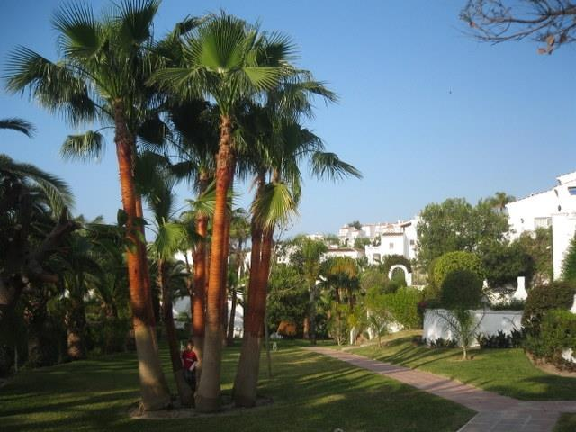 Sun kissed palms, blue skies & perfect holidays....
