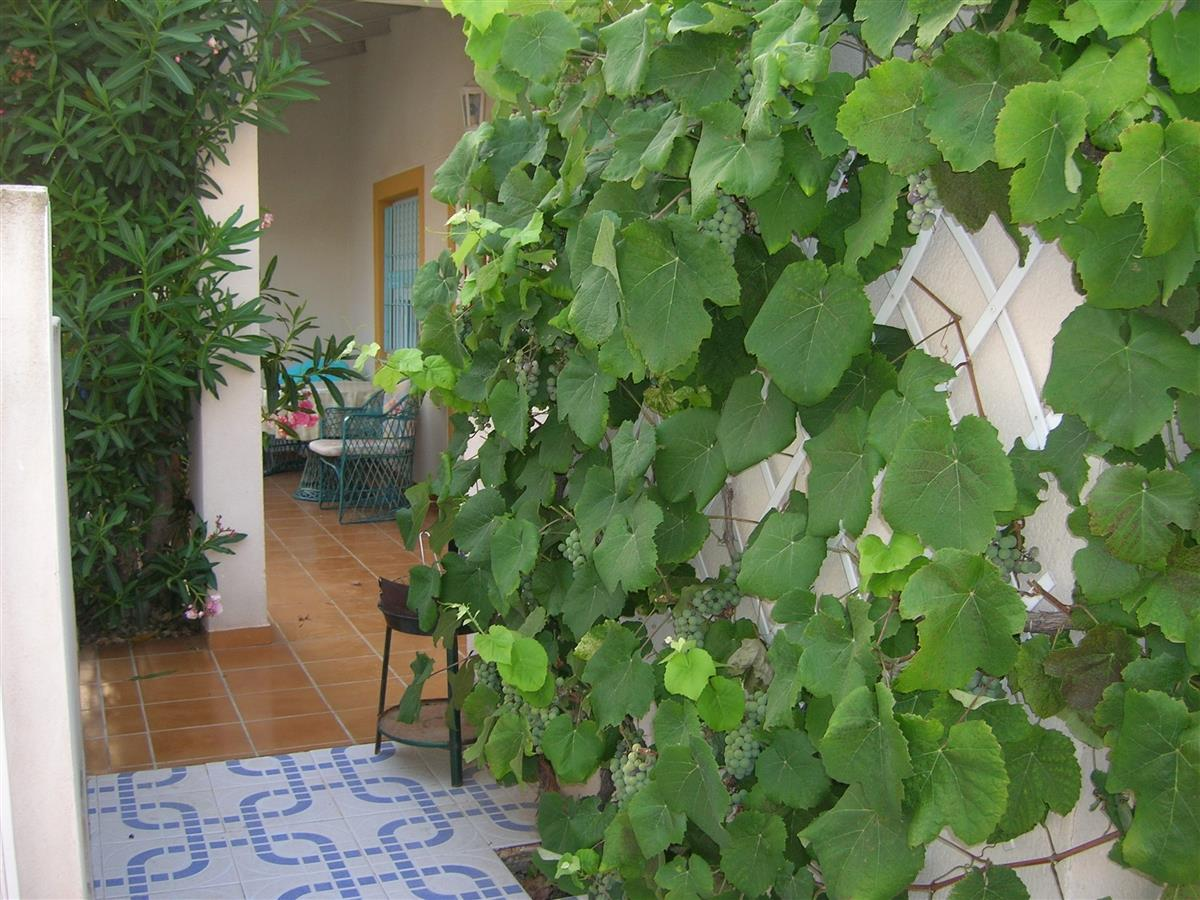 Grapevine and view of front porch