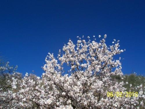 Blossom and blue skies February