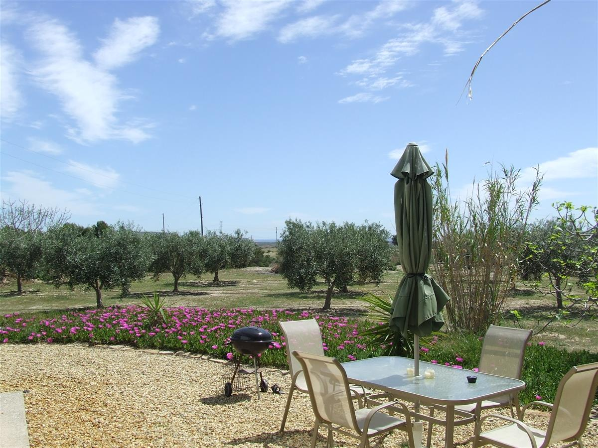 Olive trees outside the villa.