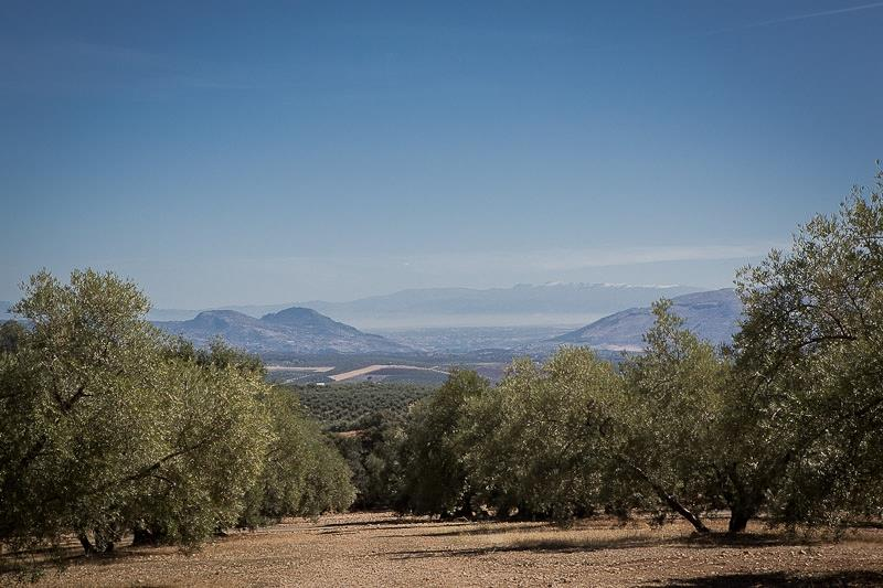View towards Granada