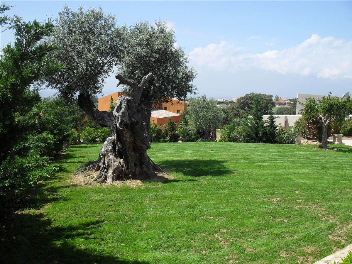 Very large garden and ancient olive tree.