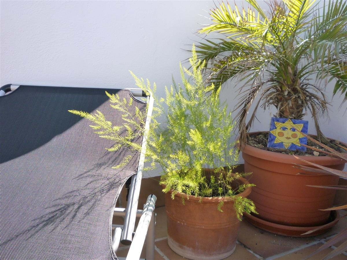 Sunbed and plants on the terrace