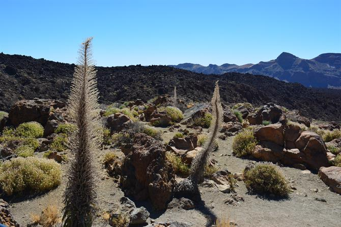 Teide national park, Tenerifa