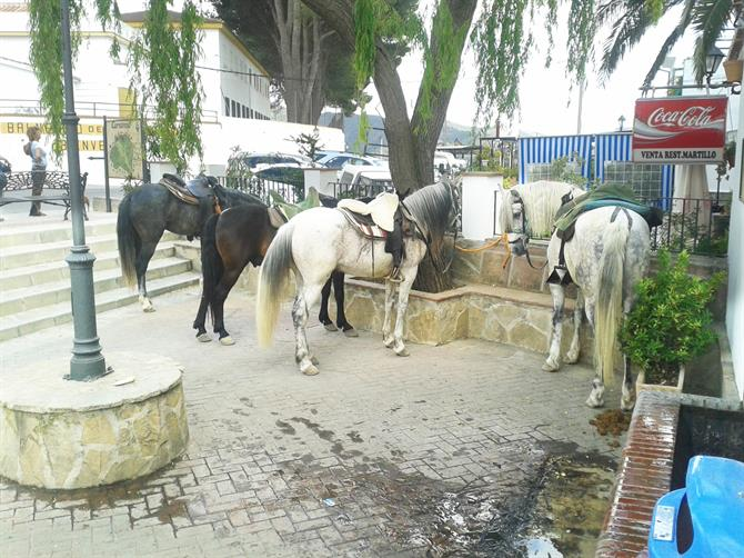 Horses at Carratraca, Malaga