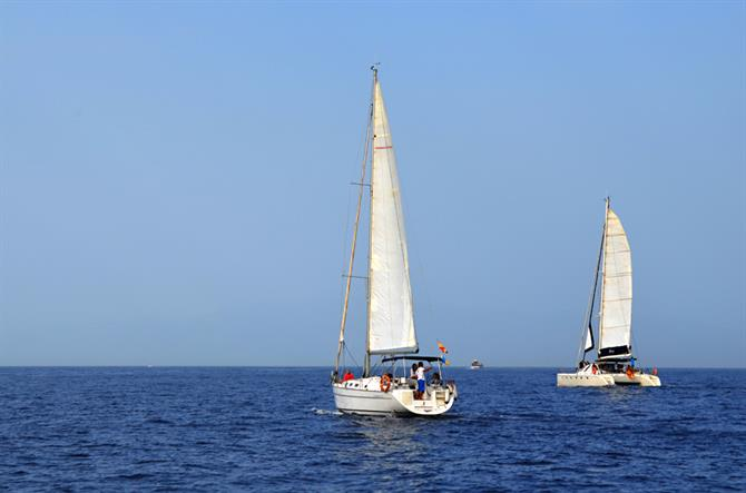 Whale and Dolphin watching boats, Puerto Colon, Tenerife