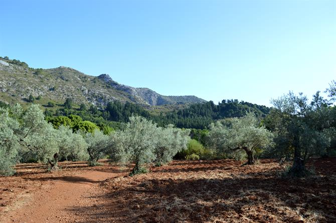 Olive groves route up La Concha